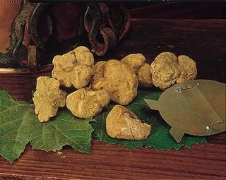 (tuber magnatum pico) o tartufo bianco di Campoli Appennino