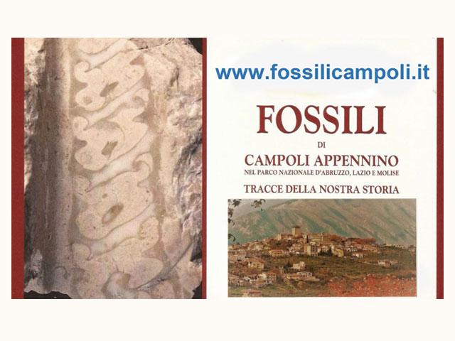 Fossili di Campoli Appennino